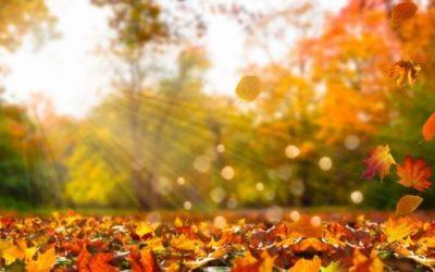 Fall Rest